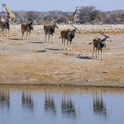 Namibië 156