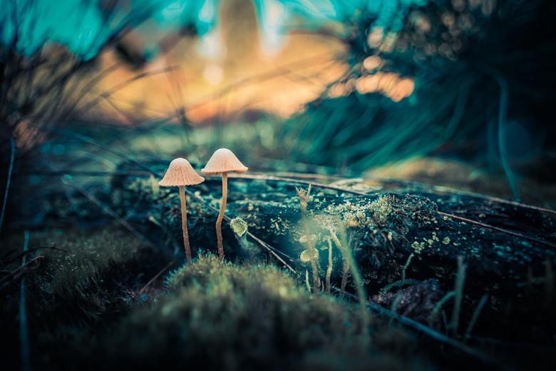 Magic Mushrooms -