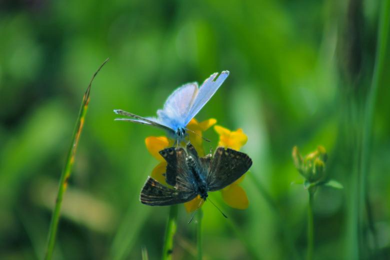 Take These Broken Wings - De gebroken vleugels van de vlinders, die nietsvermoedend een bloem delen.