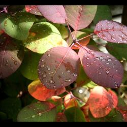 Wet leafs..