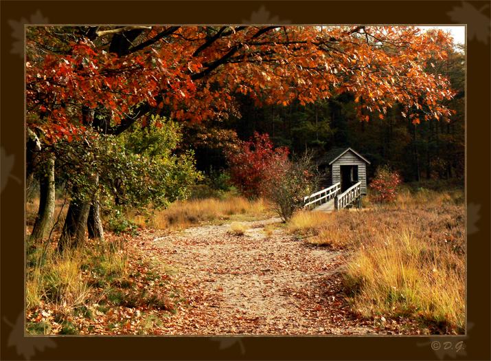 "Autumn Flavour '07 - Gemaakt in ""De Oldemeyer"" bij Hardenberg."