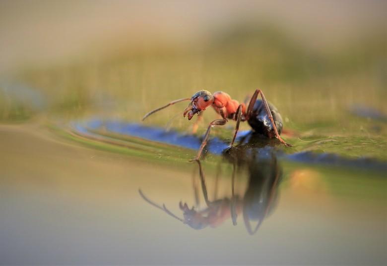 Truus - ik ben gek op miertjes fotograferen  ze zijn leuk en  ze zijn druk dus altijd een hele uitdaging om ze er goed op te krijgen  maar ik heb er h