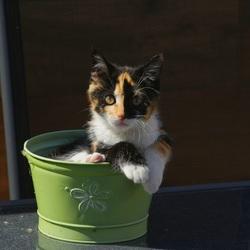 Onze kitten