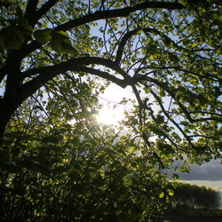 Tree and Sunshine