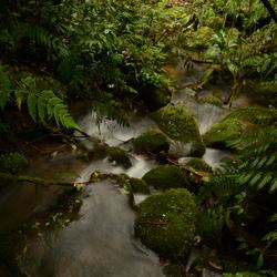 Een beekje in Costa Rica