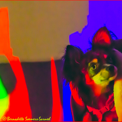 Glow in the dog