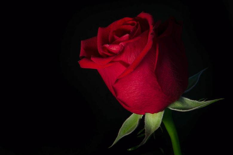 """Roosje men roosje - Onderdeel van de opdracht """"Intimiteit bloemen"""""""