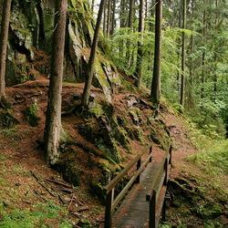 Nationalpark Harz.