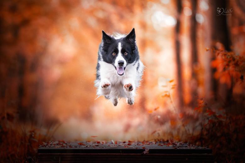 Flying Ozzy