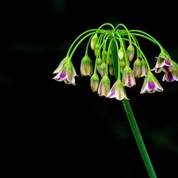 Artis bloemen