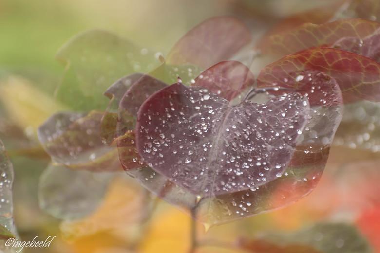 nature's art - Heb vandaag nog een keer de meervoudige belichting geprobeerd en nu meer ingezoomd op 1 blad met regendruppels. Het is net of de druppe