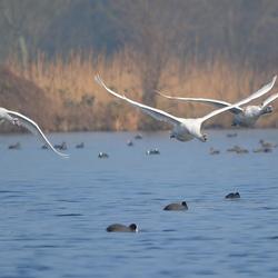 Swan Escadron!!