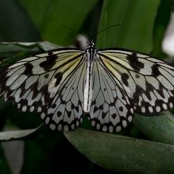 Vlinder aan de Vliet 2