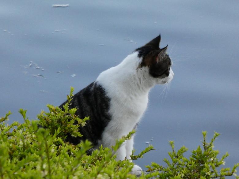Daar aan de waterkant... - ....eens even kijken wat hier zoal allemaal aan de hand is.<br /> Zou ik misschien een jong vogeltje kunnen scoren?<br />