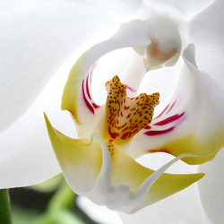 Inside the orchid