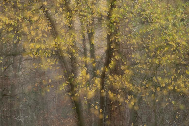 Leaves are fallen - De laatste bladeren dwarrelen naar beneden. Experimenteren met dubbele belichting zodat er een sprookjesachtige sfeer ontstaat.