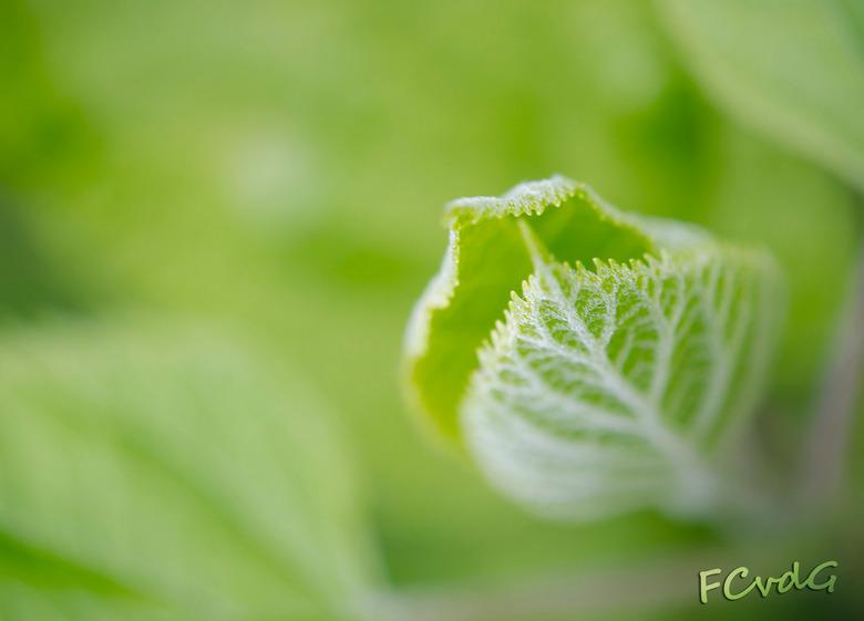 Spring time - Een van m'n eerste macro foto's, gemaakt in het voorjaar. De geringe scherptediepte in een veld van groen geeft mij het juiste
