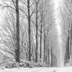Winterse bomenlaan
