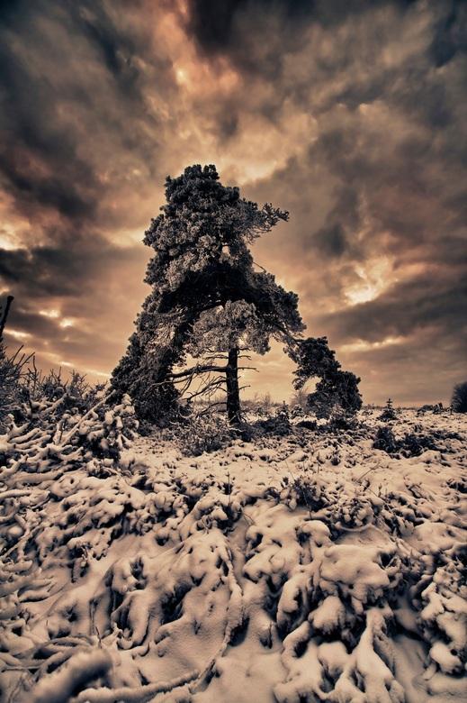 Lonely tree - Een eenzaam boompje aan de buitenkant bedenkt met sneeuw/ijzel