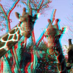 Blijjdorp Zoo Rotterdam 3D