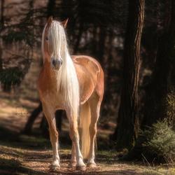 Beautiful blond one