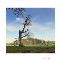Lonely tree....