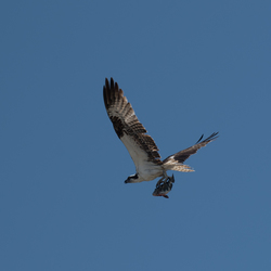 Osprey, Florida, USA