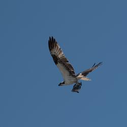 Osprey, Florida, USA