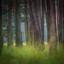 doorkijkje in het bos