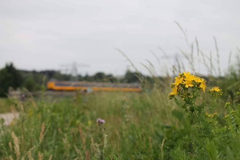 Intercity of natuur? Snel of rust? - De rust van het bloemetje of toch met een aardig gangetje in de trein met de intercity naar Zwolle