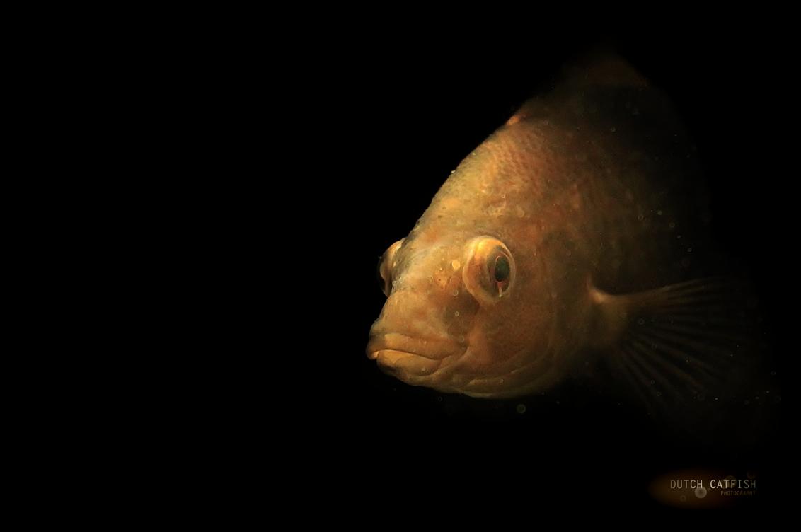 Vis in zeeaquarium Bergen (NH)
