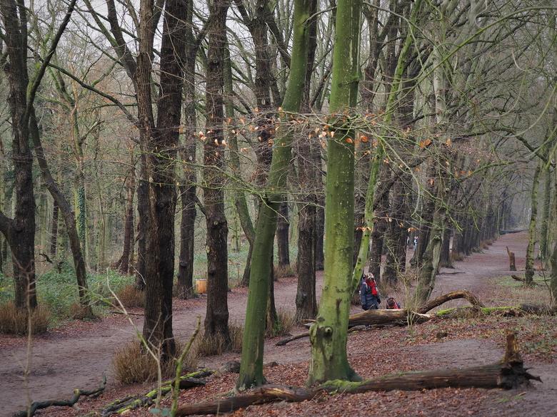 Struinen .... - Door het Groenendaalse bos in Heemstede