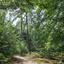Kijkje in het bos - Montferland Zeddam achterhoek