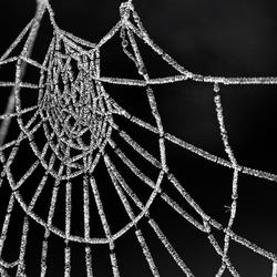 Spinnenweb II