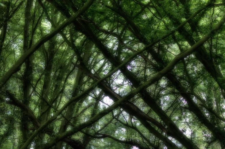 Verbinding - Bomen die elkaar letterlijk opzoeken boven een bosbeek.. prachtig op te zien en abstracte kunst