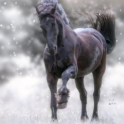 Wintermood...