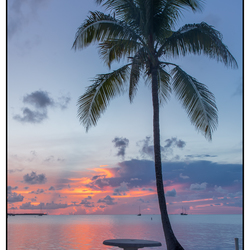 Zonsondergang met palmboom.