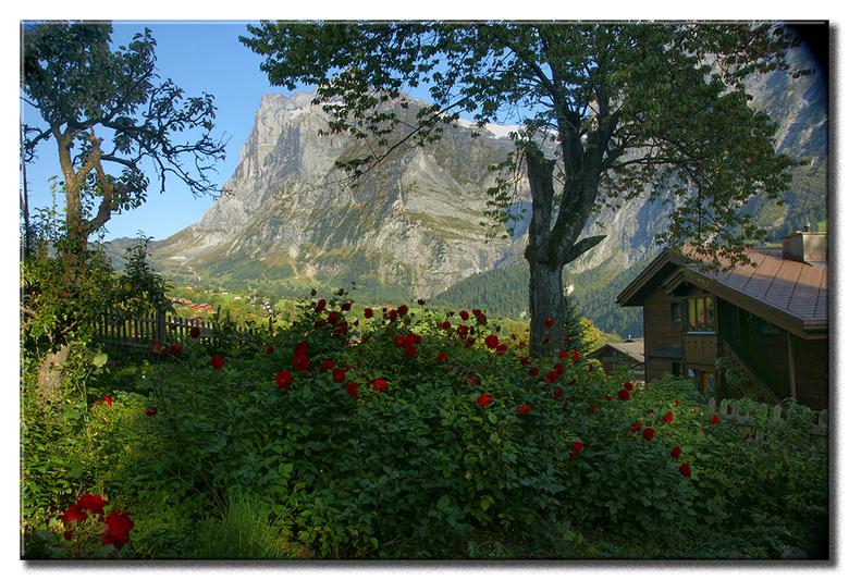 Zomaar een tuintje... - ...maar wel een rotstuintje, zo met op de achtergrond de Wetterhorn en de Grosse Scheidegg.<br /> Maar wel groot zien.