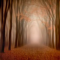 Gaasterlandse bossen..........