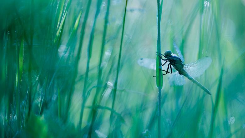 Summer secrets - Heerlijk, als je er dan toch weer eentje vindt, verborgen in het gras.