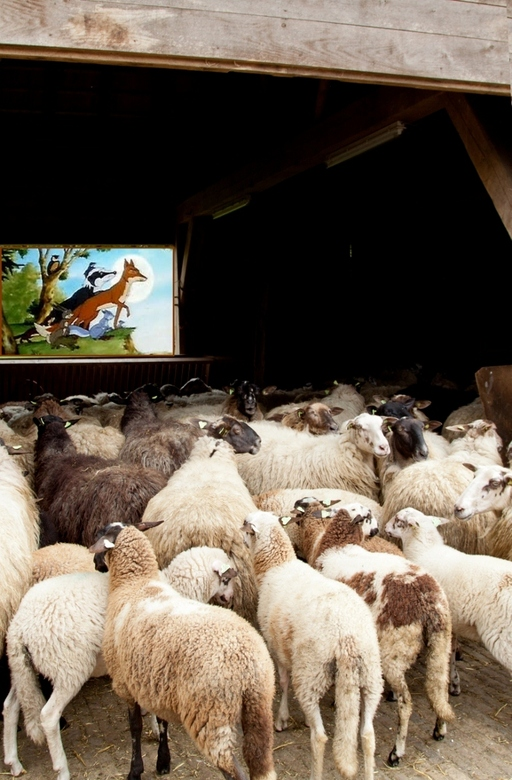 """Bioscoopje pakken - Bedankt voor jullie verschillende reacties op de <a href=""""http://zoom.nl/foto/1868256/overig/floriade.html?object=user&amp;object_"""