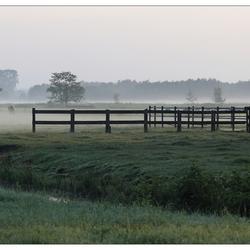 Mistige morgen over de weilanden