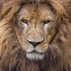 Bruno Stichting Leeuw