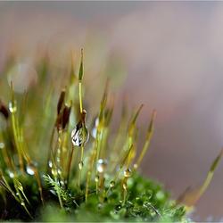 Charme van de regen