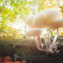Magic autumn mushrooms