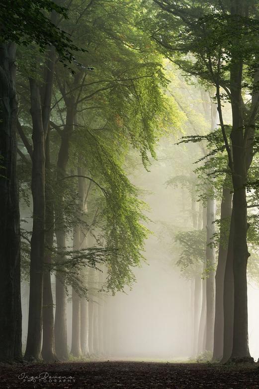 Canopy. -