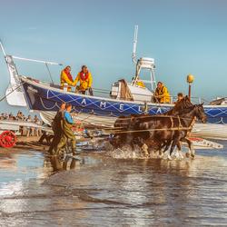 De Amelander paardenreddingboot