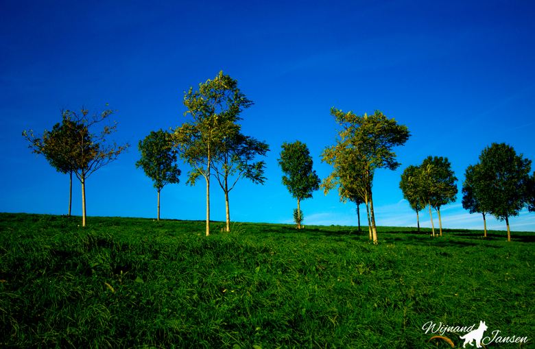 Beautiful trees on the hill. -