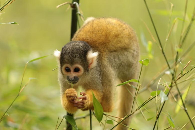 Nog een aapje