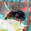 Hommel Bumble-bee Rotterdam 3D